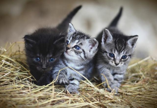 cara merawat anak Kucing yang baru lahir agar tetap hidup