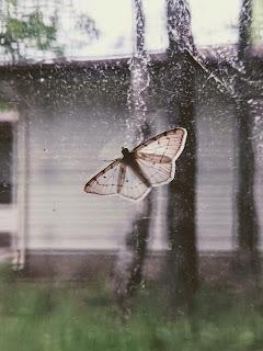 Smaller Moth On Window Pane