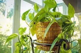 Best indoor plants for health