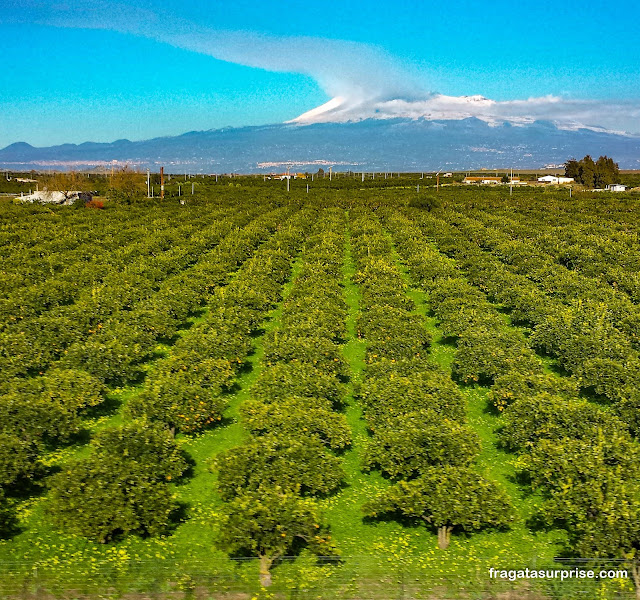 Plantações de limão siciliano, Sicília