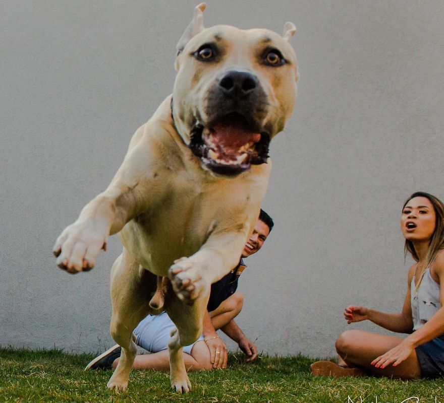 12 Hilarious Pre-Wedding Photos Of Brazilian Couple And Their Dog