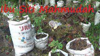 Membuat Kompos Sampah Daun dan Rumput Secara Mudah