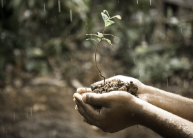 Picture of hands holding a plant and soil.
