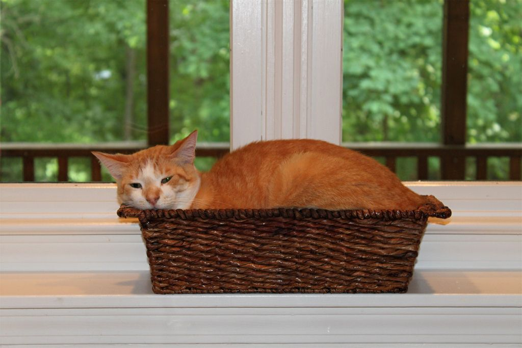 25. Opie in basket by LizPix5
