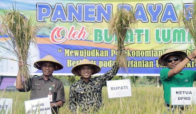 Plt Kepala Dinas Pertanian dan Bupati Lumajang saat Panen Raya