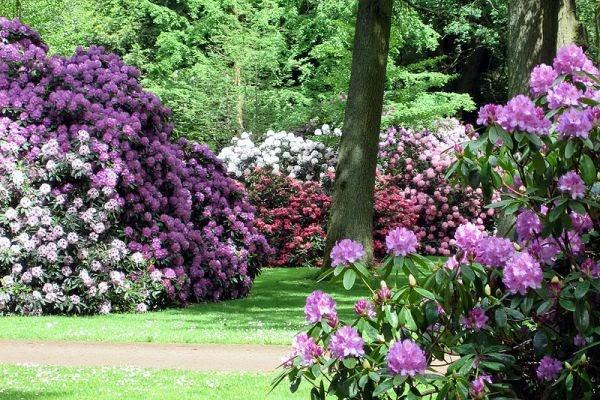 Rhododendron-Park, Bremen