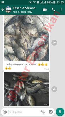 Essen Ikan Nila Khusus Di Alam Liar