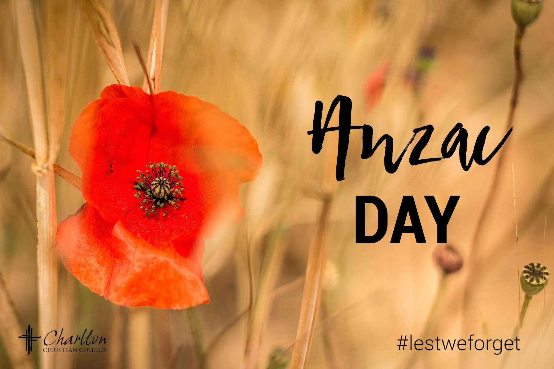 Anzac Day Wishes Pics