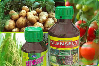 Insektisida Klensect 200 EC, Obat Pengendali Ulat Pada Tanaman Padi, Bawang, dan Lain-lain.