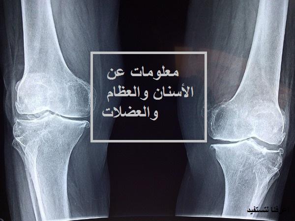 معلومات عن الأسنان والعظام والعضلات