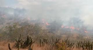 Incêndio atinge áreas rurais de Picuí