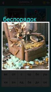 собака лежит в кресле, а вокруг беспорядок который она сделала