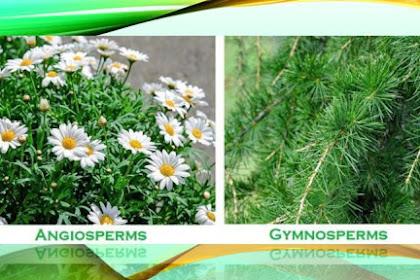 Jelaskan karakteristik penting dari gymnospermae?