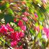 Na esperança de um riso: o beija-flor