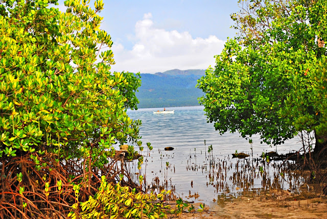 mangroves at Alibijaban Island