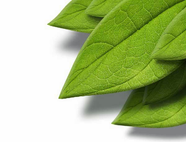 How to Create a 3D Leaf from a Texture Photograph