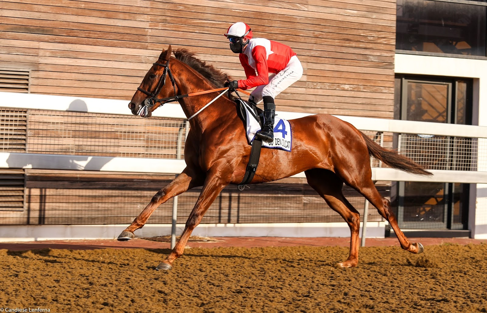 Vodacom Durban July 2020 Horse Profile - Golden Ducat