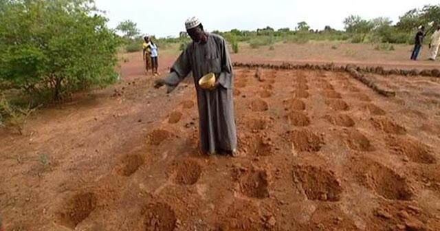 Yacouba Sawadogo, Lelaki yang Menghentikan Badai Padang Pasir