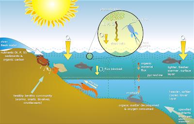 Pembagian Zona Ekosistem Air Tawar dan Air Laut