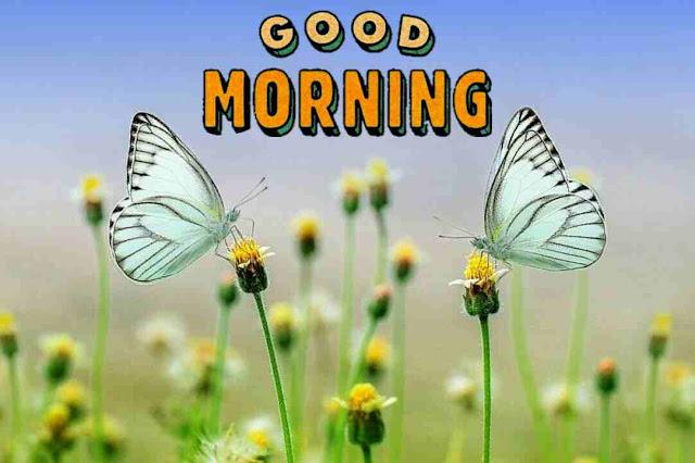 Beautiful good morning image nature