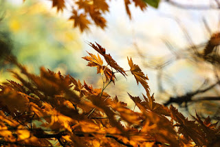 Картинки на тему осень