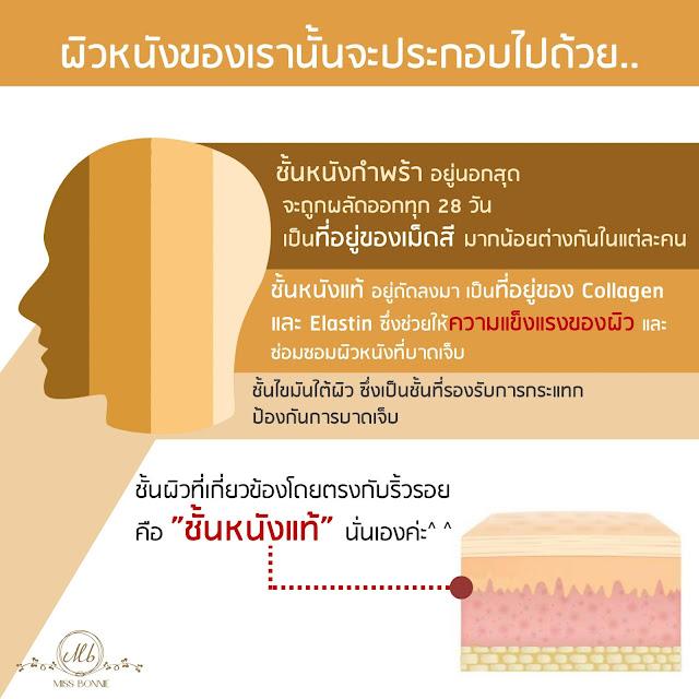 agingcause-prematurewrinkle-dermis