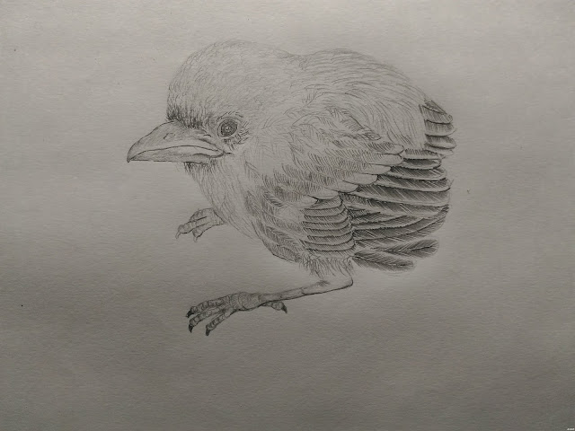 Pencil drawing study of small birds