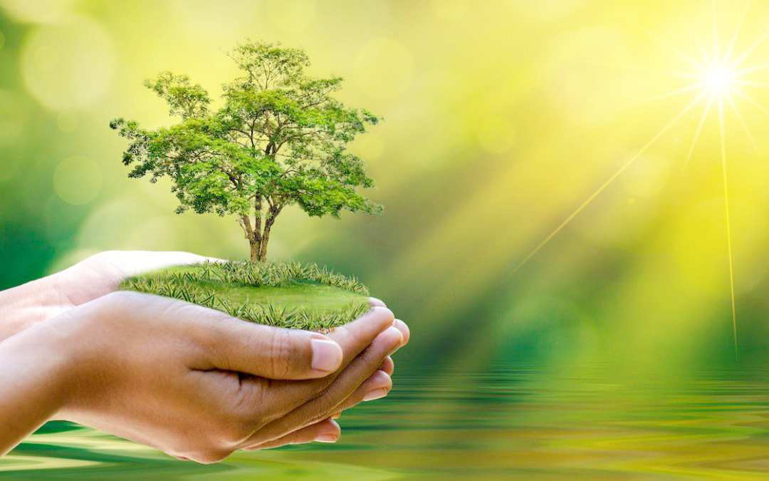 Importance Of Environment in hindi