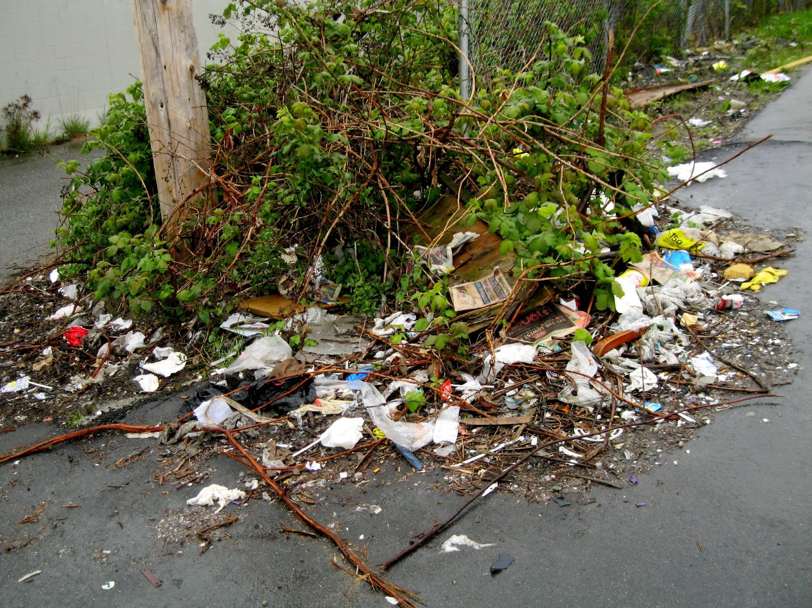 Image result for littering along walkways