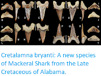http://sciencythoughts.blogspot.com/2018/01/cretalamna-bryanti-new-species-of.html