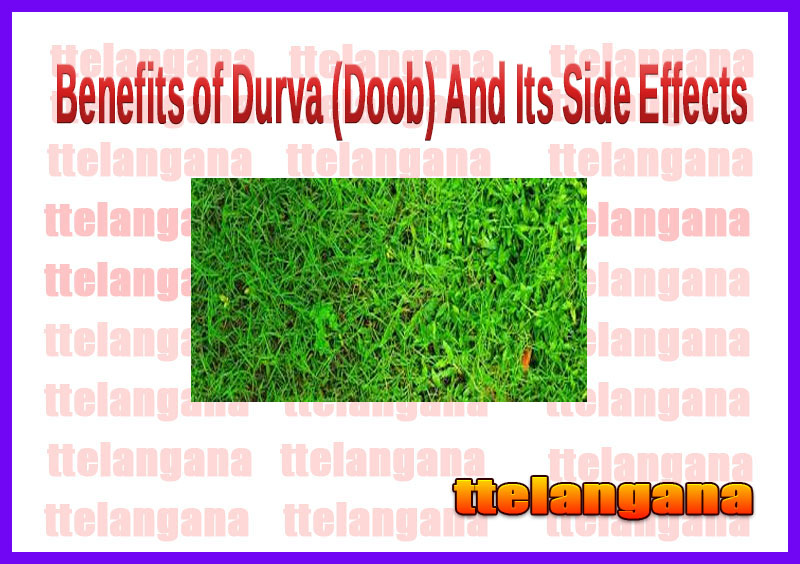 Benefits of Durva (Doob) And Its Side Effects