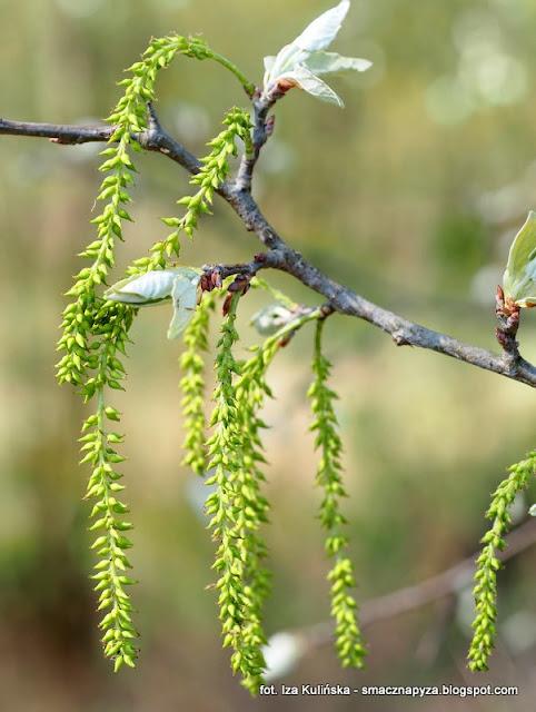 drzewa, drzewo, kwiatostan, las legowy, legi, nad rzeka, warszawa, spacer, wycieczka, piekny dzien, na grzyby, grzybobranie