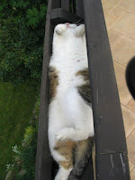 Gatos durmiendo en posiciones insólitas
