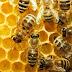 ΗΠΑ: Το 44% των αποικιών μελισσών χάθηκε μέσα σε ένα χρόνο
