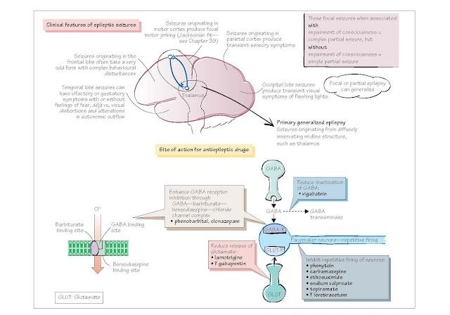 Neurophysiological Disorders: Epilepsy, Definition and classification of epilepsy, Pathogenesis of epilepsy, Treatment of epilepsy, Mechanisms of action of anticonvulsants,
