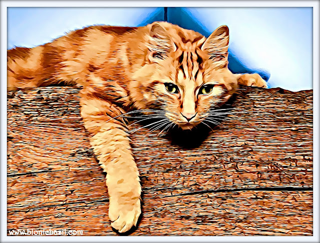 Fudge on The Beam ©BionicBasil® Colouring with Cats 110