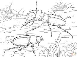 Rhinoceros beetle Coloring pages On Jungle