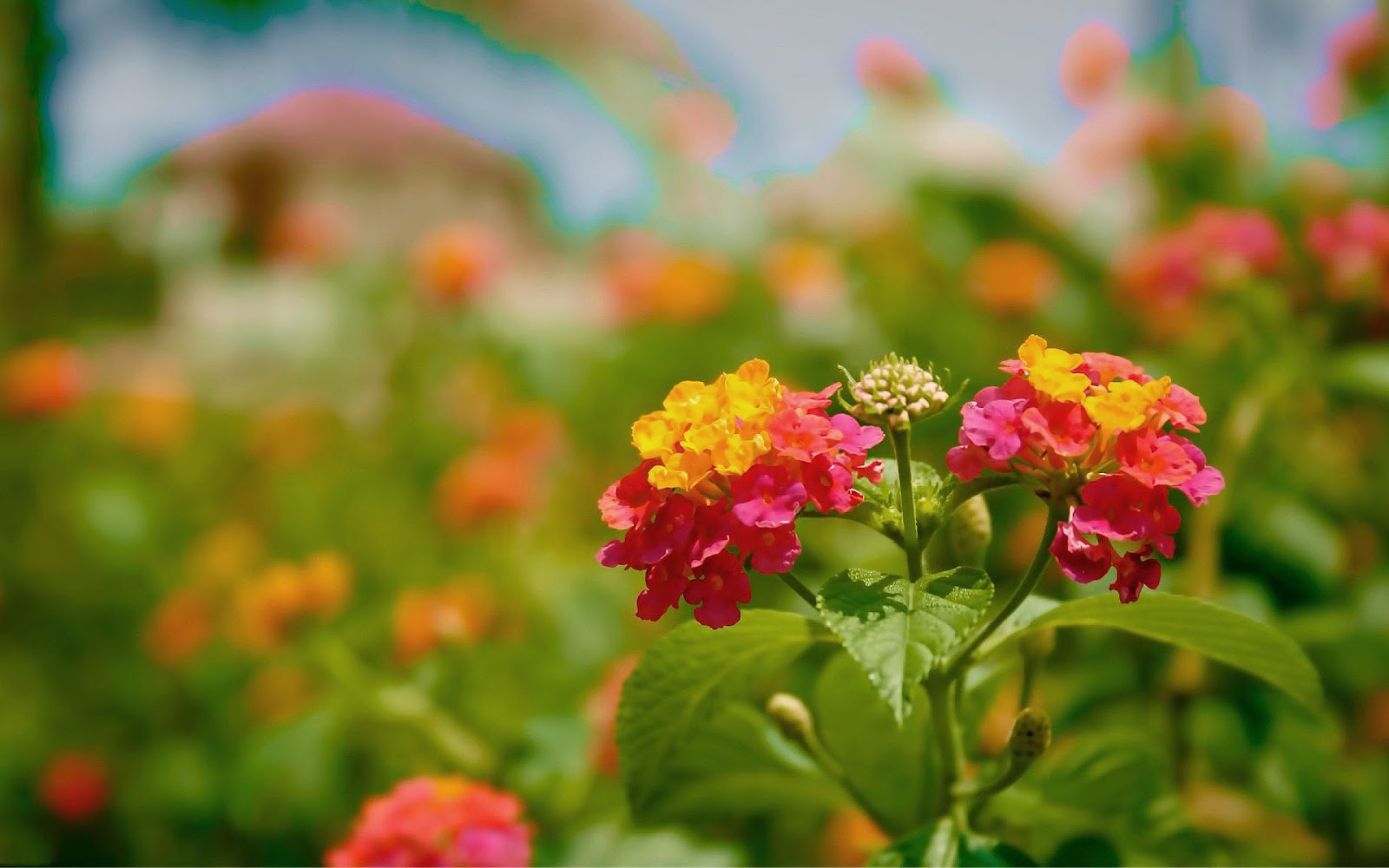 Smiley Full Hd Wallpaper And Achtergrond: Leuke Achtergrond Met Bloemen