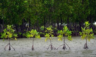 http://www.teluklove.com/2016/12/pesona-keindahan-wisata-mangrove-park.html