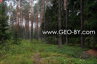 Way through the forest to the place where was former settlement Bliznieta (Gemini)