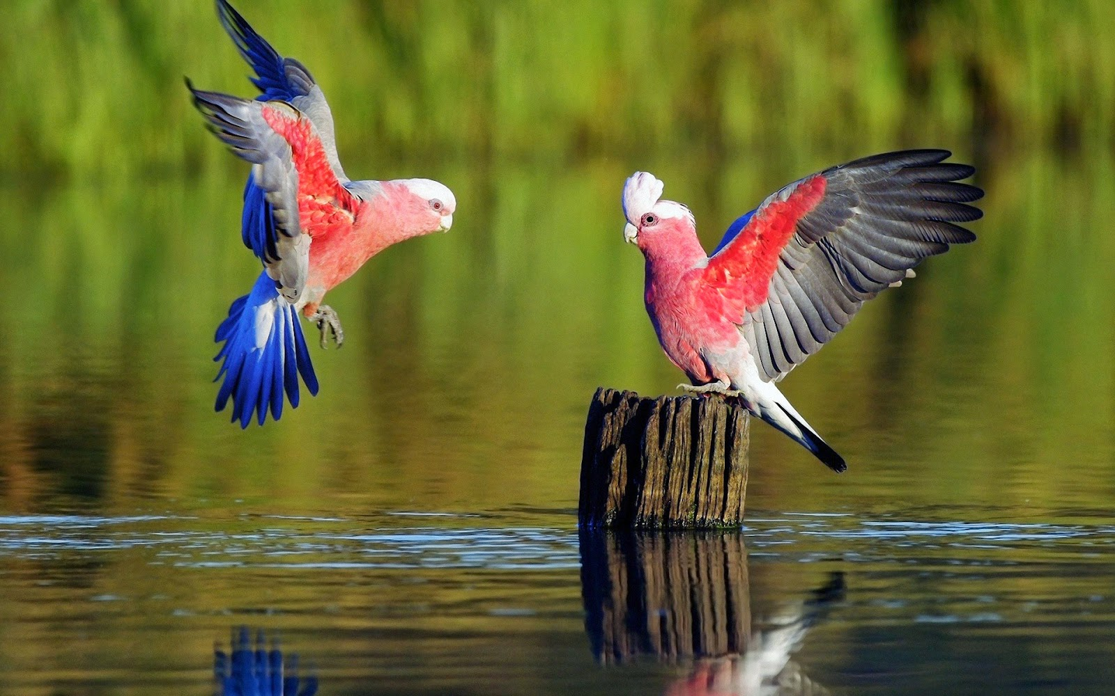 HD Wallpapers: best Most amazing and beautiful birds in ... - photo#33