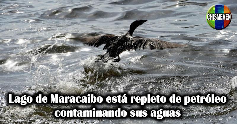 Lago de Maracaibo está repleto de petróleo contaminando sus aguas