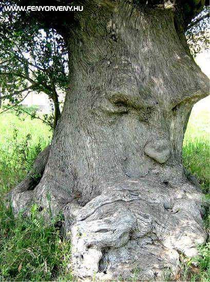 A gondolkodó fa (Képek)