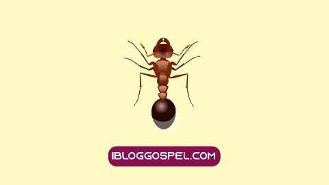 Meaning of Ants In Dream
