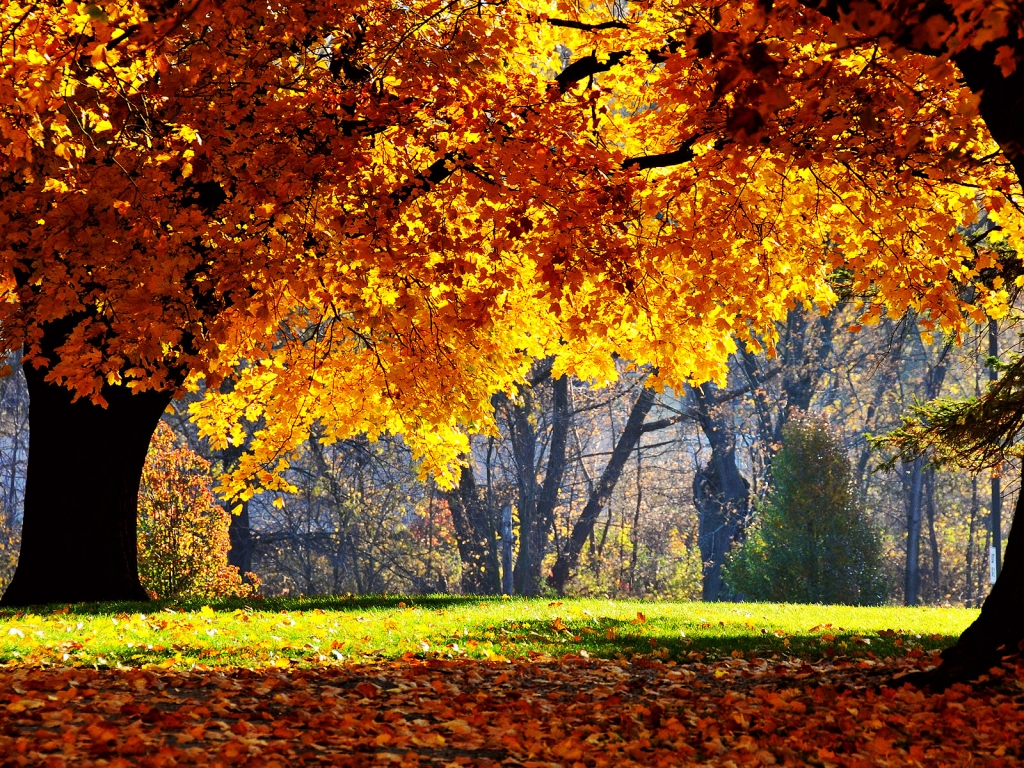 Autumn Season Standard Resolution HD Wallpaper 18