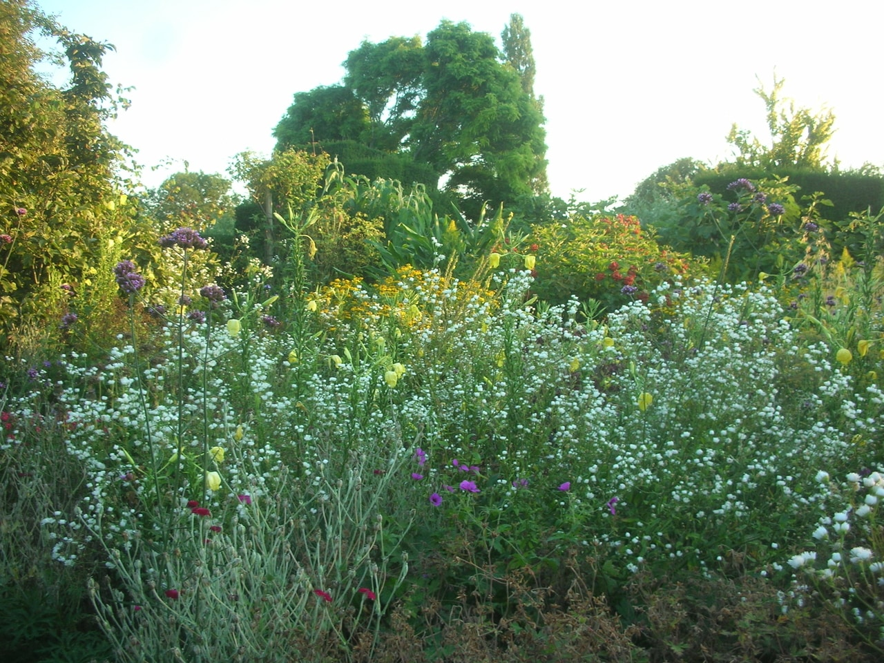 One of the beds at Great Dixter garden with lots of self sowers like Erigeron annus, Verbena bonariensis, Lychnis coronaria and evening primrose threading through plantings