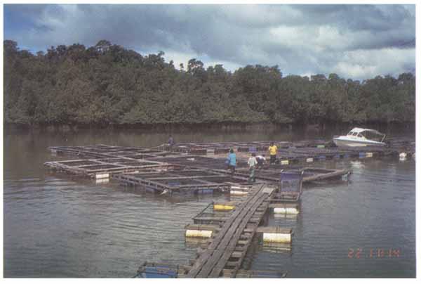 Budidaya Laut Budidaya Ikan Ikan Hias Resep Ikan Gambar Dan