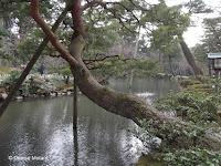 Tree supports can be planted in the water - Kenroku-en Garden, Kanazawa, Japan
