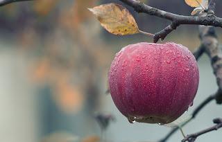 apple-fruits-fresh