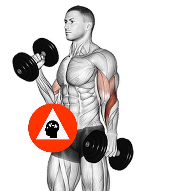 exercice musculation biceps curl haltère prise marteau